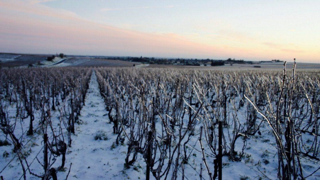Beaufort, le Champagne Bio d'Ambonnay gallerie 1