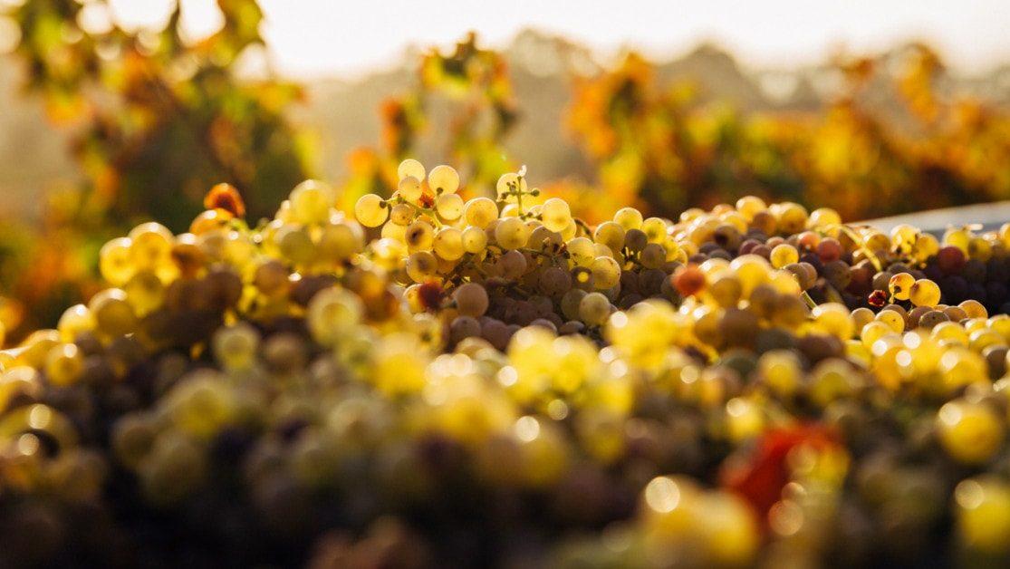 Les vins et confitures du Domaine de Montcy gallerie 1