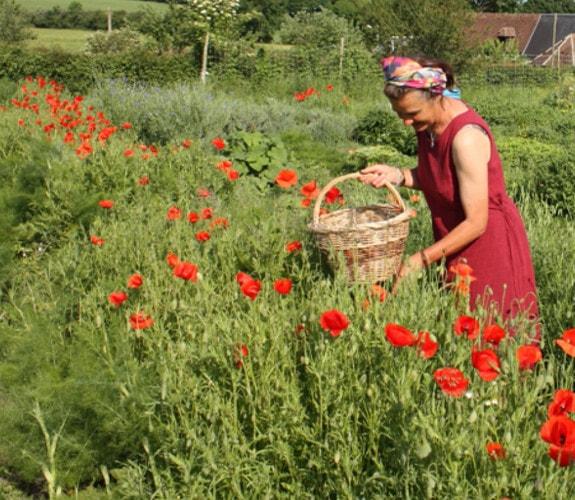 Producteur Jardin d'Even, le jardin des plantes médicinales et aromatiques image