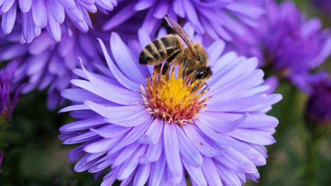 Producteur de miel bio gallerie 2