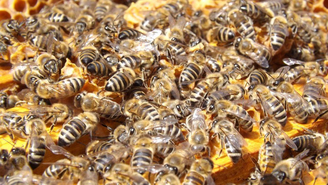 Producteur de miel bio gallerie 3